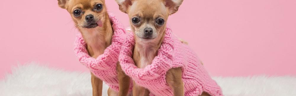 Vestiti per cani, certo che si!