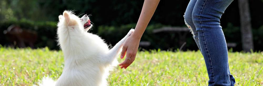 Nino & Lulù alla prima edizione del Dog's Day