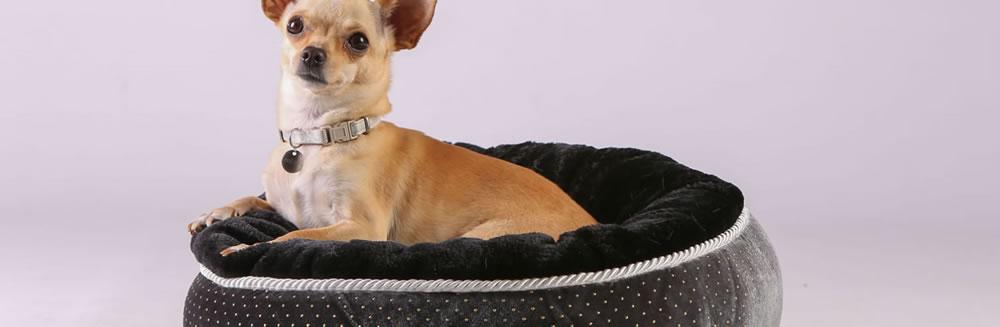 Sai scegliere la giusta cuccia per il tuo cane?