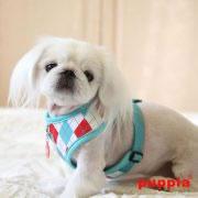 puppia_argyle-harness-A-paqa-ac1410-aqua_03