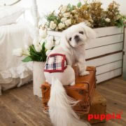 puppia_vogue-manner-band_paqa-mb1426-beige_04