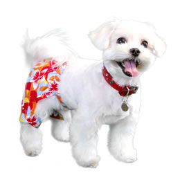 tasmania-swim-trunk-pooch-outfitters-costume2