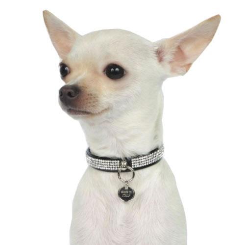 blin-blin-collare-per-cani