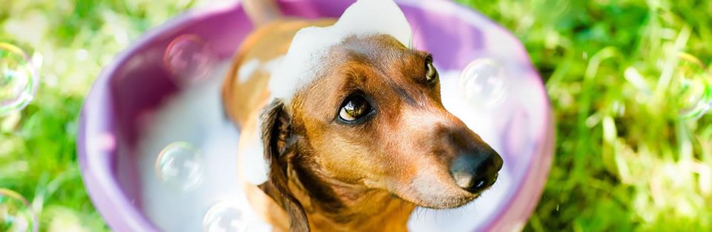 Shampoo per cani, quali, quando e come usarli