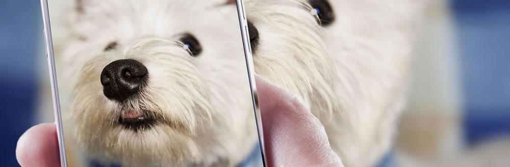 Il tuo cane in posa per il calendario Ugopiadi 2017
