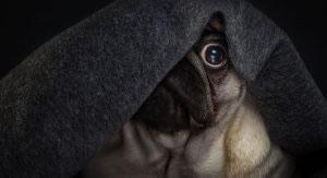 Cane fa pipì in casa