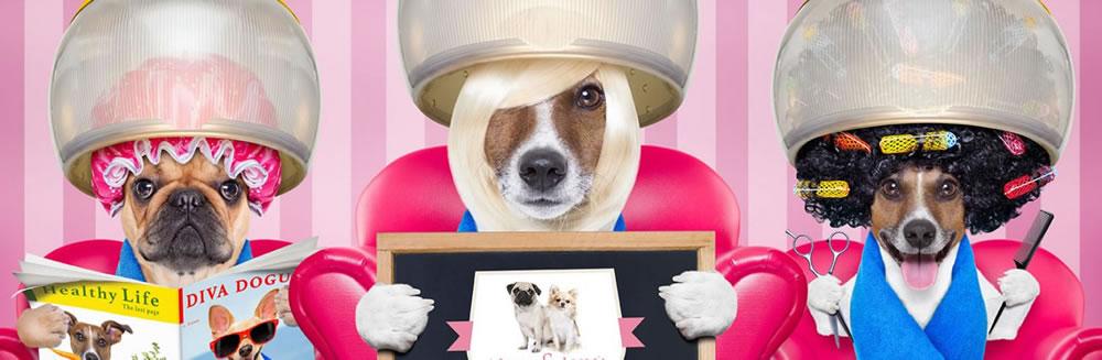 Ci stiamo preparando per la sfilata al Livorno Dogs & Friends