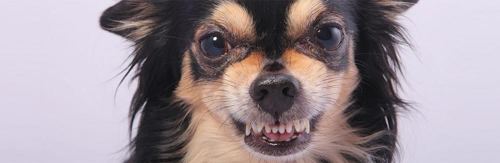 Le 4 regole per non avere un cagnolino killer!