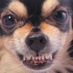 Anteprima dell'articolo Le 4 regole per non avere un cagnolino killer!