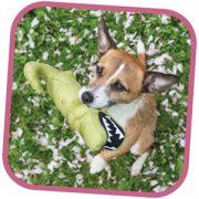 Gioco per cani Becoplush_1 cocco_01