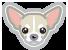 Ugopiadi Chihuahua