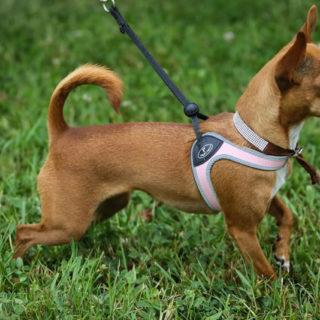 Chihuapiadi-2016-Le-Olimpiadi-del-cane-Chihuahua-0-3