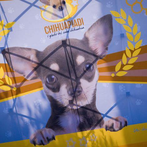 Ugopiadi 2016 [chihuahua] - Teaser