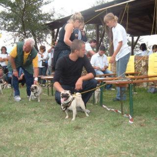 Ugopiadi 2004 - Le olimpiadi del cane carlino 004