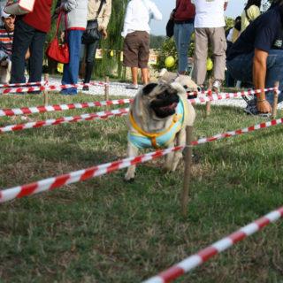 Ugopiadi-2007-I-giochi-del-cane-carlino-008
