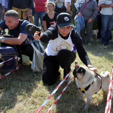 Ugopiadi-2008-I-giochi-del-cane-carlino-001