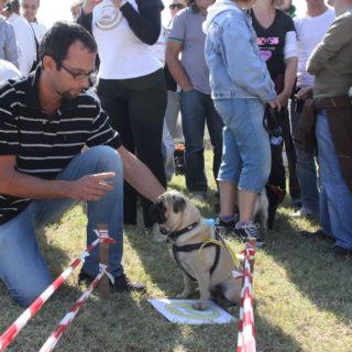 Ugopiadi-2008-I-giochi-del-cane-carlino-002