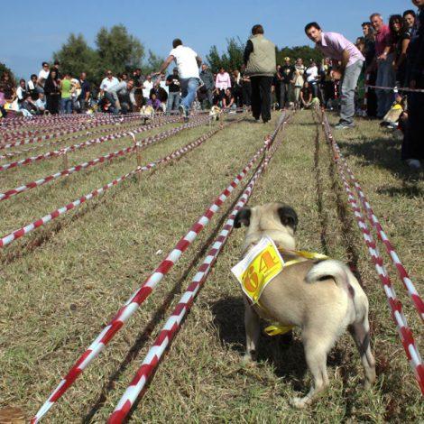 Ugopiadi-2008-I-giochi-del-cane-carlino-003