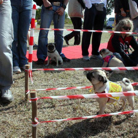Ugopiadi-2008-I-giochi-del-cane-carlino-004