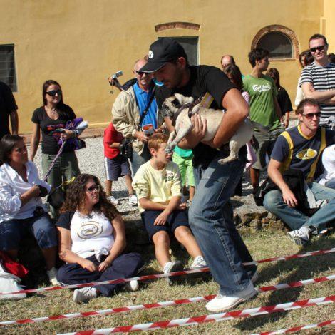 Ugopiadi-2008-I-giochi-del-cane-carlino-007
