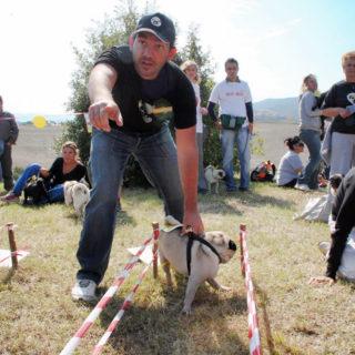 Ugopiadi-2008-I-giochi-del-cane-carlino-008