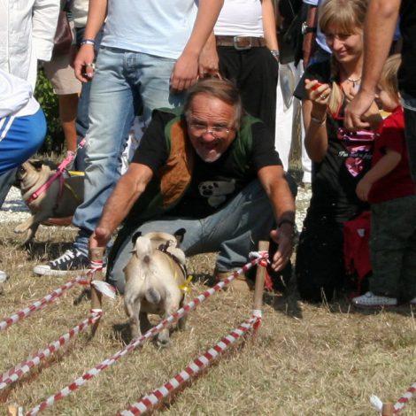 Ugopiadi-2008-I-giochi-del-cane-carlino-009