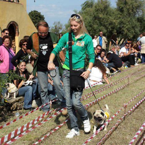 Ugopiadi-2008-I-giochi-del-cane-carlino-010