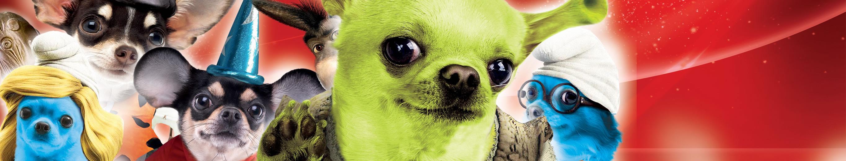Ugopiadi Chihuahua - Le Olimpiadi del cane Chihuahua 2017 - Tema Cartoon