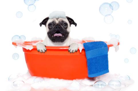 Antiparassitari per cani: quale scegliere?