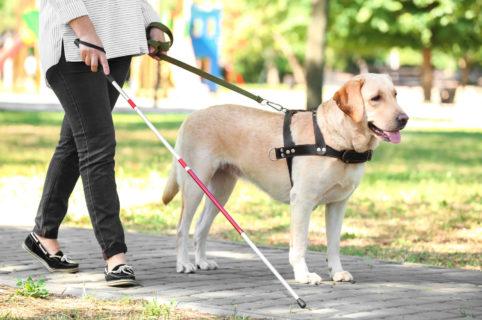 Alle Ugopiadi 2017 aiutiamo i cani guida grazie al Lions Club Livorno Host
