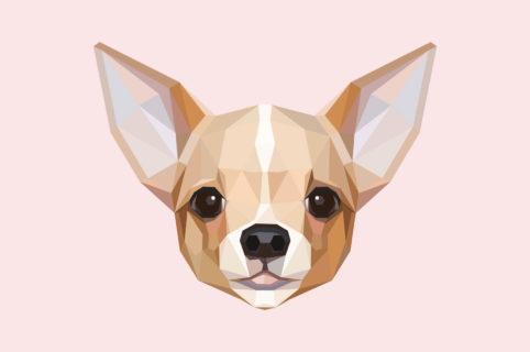 Ugopiadi Chihuahua slitta di un giorno