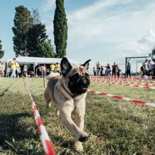 Ugopiadi 2018 - Le Olimpiadi del cane carlino - Foto Ciriello - 002