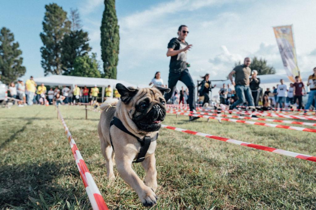 Ugopiadi - Le Olimpiadi del cane carlino