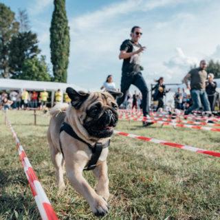 Ugopiadi 2018 - Le Olimpiadi del cane carlino - Foto Ciriello - 006