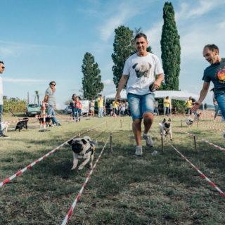 Ugopiadi 2018 - Le Olimpiadi del cane carlino - Foto Ciriello - 010